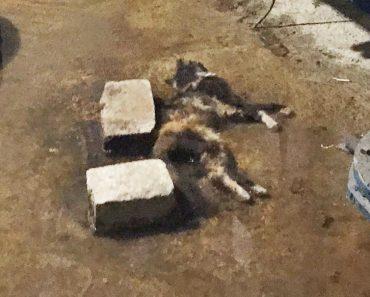 Лежит дохлая кошка